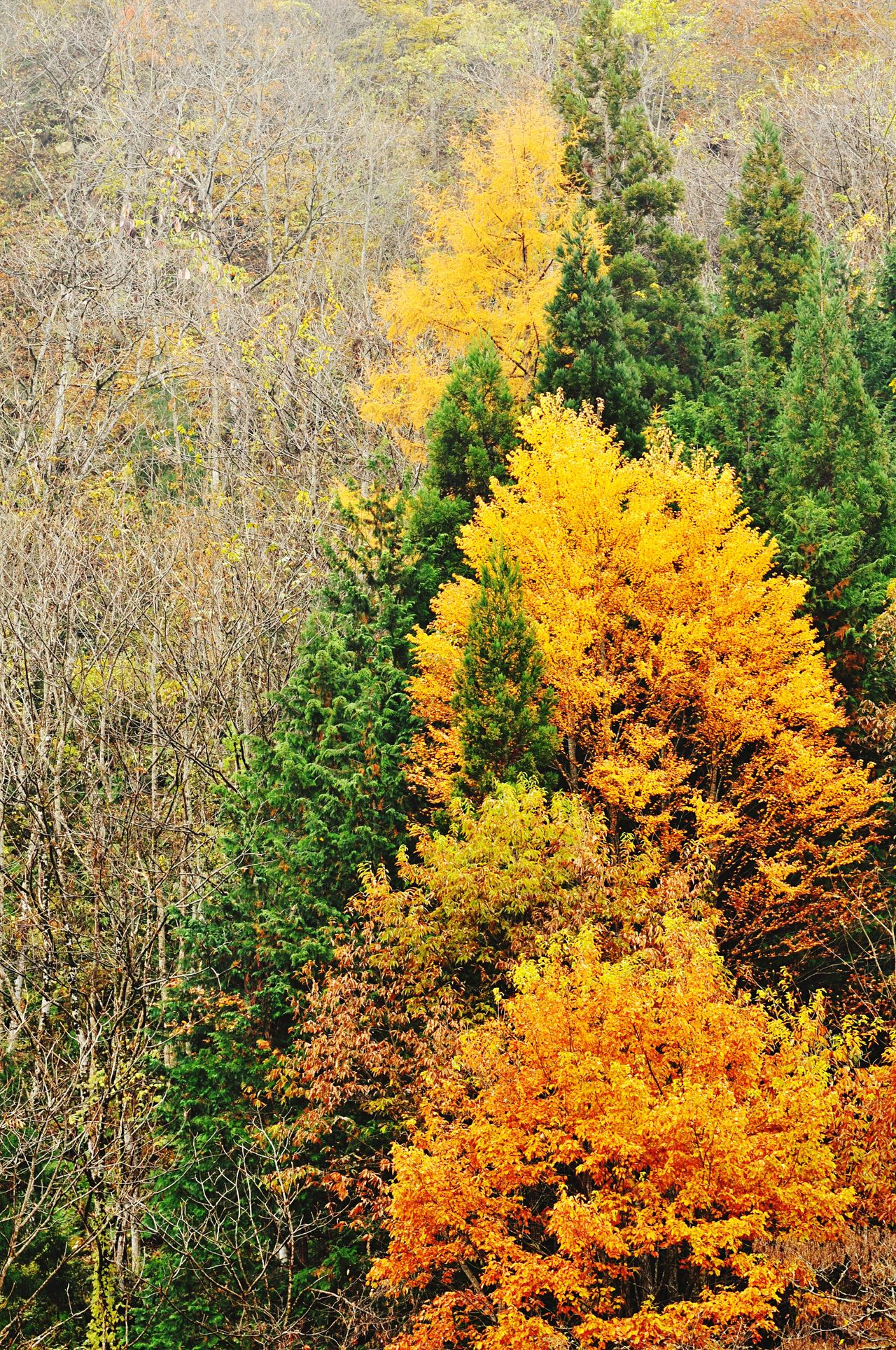 Tree Plant Outdoors Nature Yellow Beauty In Nature No People Day Leafs Autumn