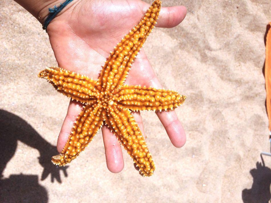 Estrela do mar Sea star. Seastar Estreladomar Praia Grande Estrela Do Mar Sea Star Beautiful Beach