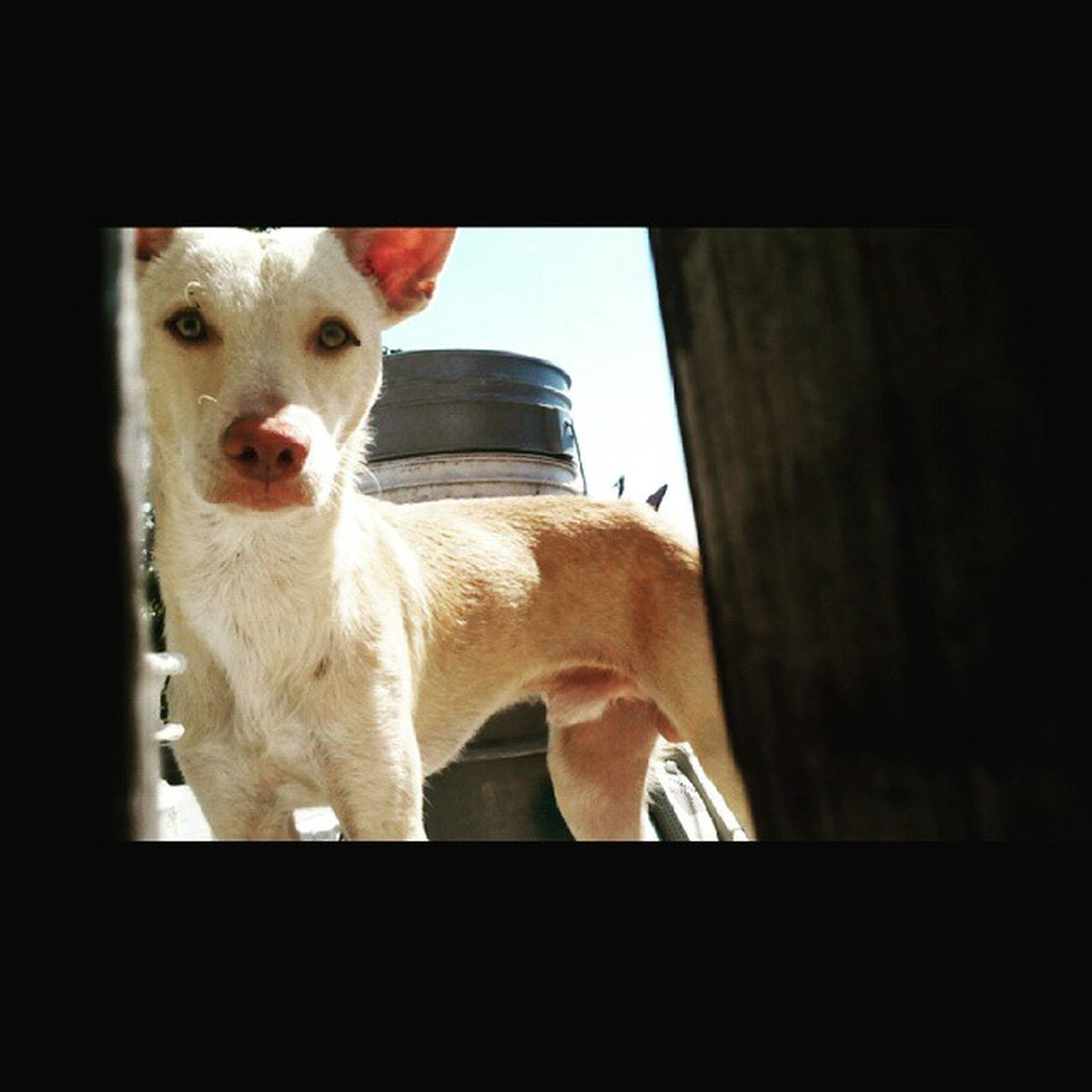 Pipo Picture Gallery Dog FotoDelDia Siguemeytesigo Instalike Instamoment