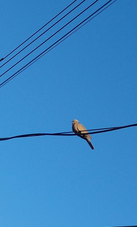 I Am A Bird !!! I Wanna Dive Into This Sky But This Blue Is Too Deep !!! Still Thinking About IT ... Amazing Beauty in my City Wires 43 Golden Moments On The Way Colors Dove Animals Colour Of Life