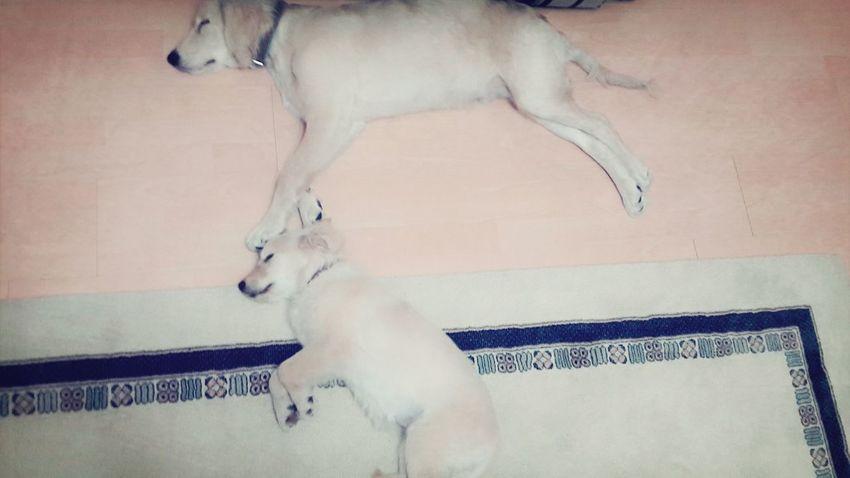 Sleeping Baby  I Love Pets era and tonny