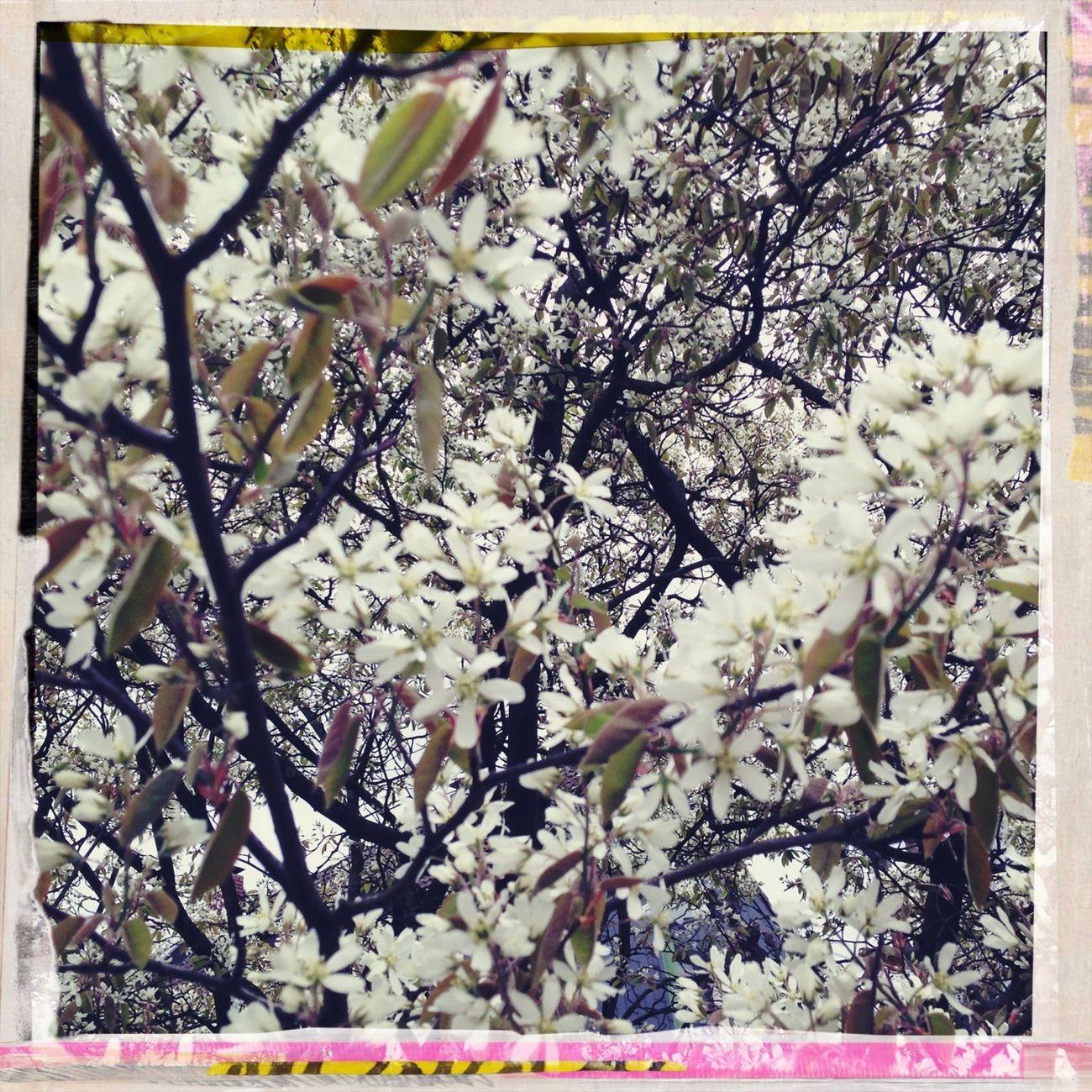 TreePorn EyeEm Best Shots Flower Porn Nature Collection