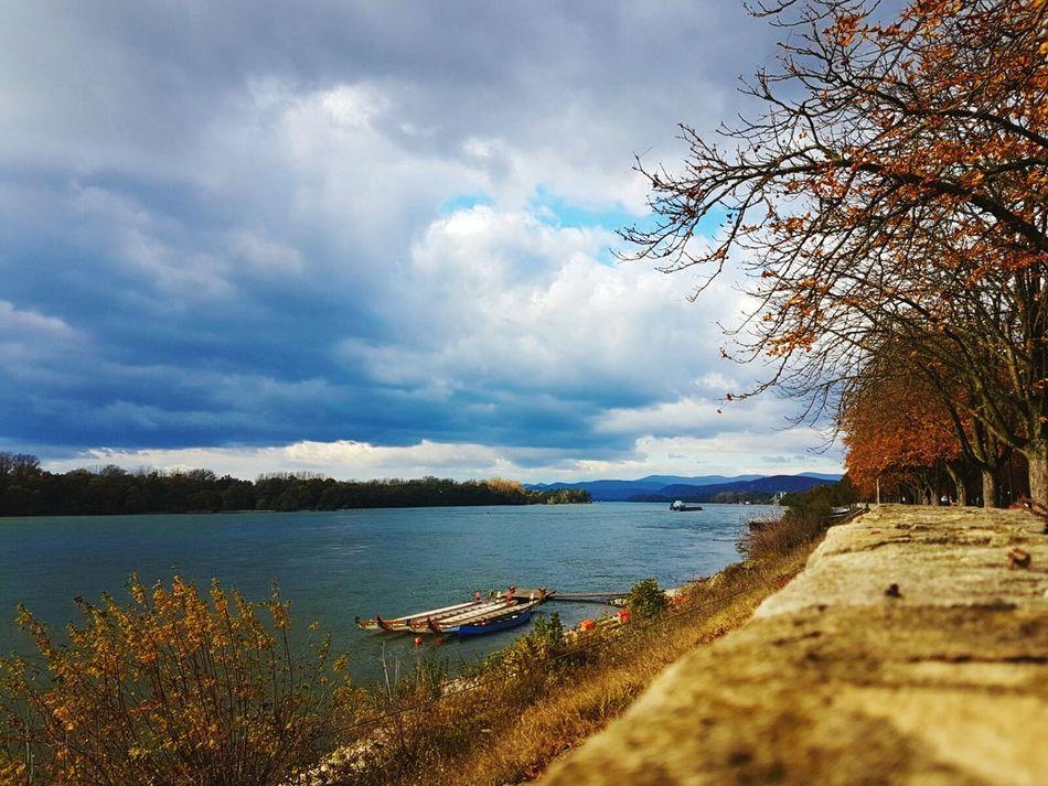 Tree River Duna Danube Hungary Vac