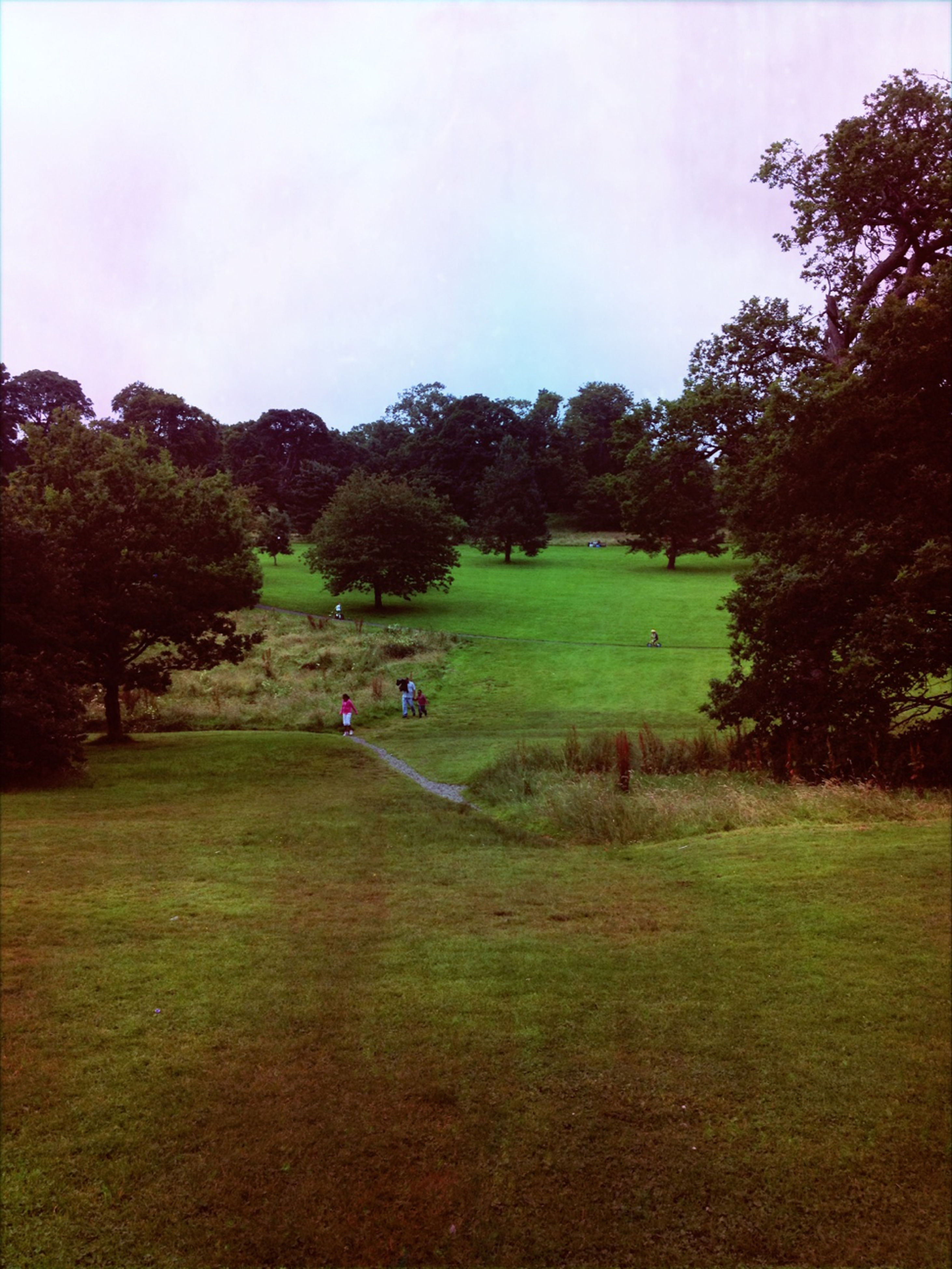 tree, grass, green color, field, landscape, tranquility, tranquil scene, park - man made space, sky, grassy, growth, nature, beauty in nature, scenics, park, leisure activity, day, outdoors, lawn