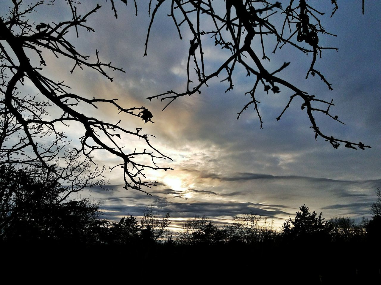 tree, silhouette, sky, nature, beauty in nature, cloud - sky, low angle view, no people, tranquility, sunset, outdoors, scenics, branch, day