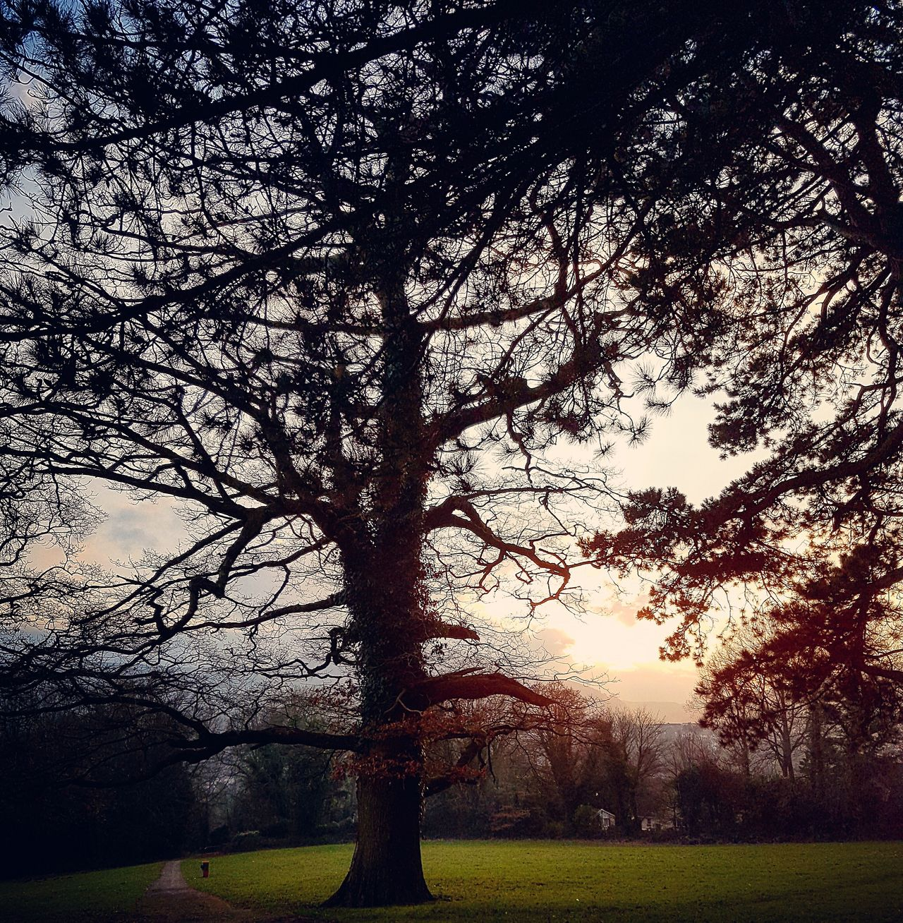 A walk in the park Tree Sky No People Nature Sunset Beauty In Nature This Week On Eyeem New Talents On EyeEm Landscape_Collection Nature Collection EyeEm Gallery Amateurphotography EyeEm Best Shots - Nature Dusk Sky Walking Around Taking Pictures Wales Outdoors