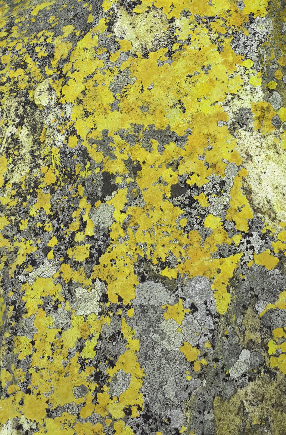 Grey And Yellow Grey And Yellow Colour Lichen Lichen On A Rock Moss Moss & Lichen Rock Rock Texture Rock Textures Yellow And Gray Yellow And Grey
