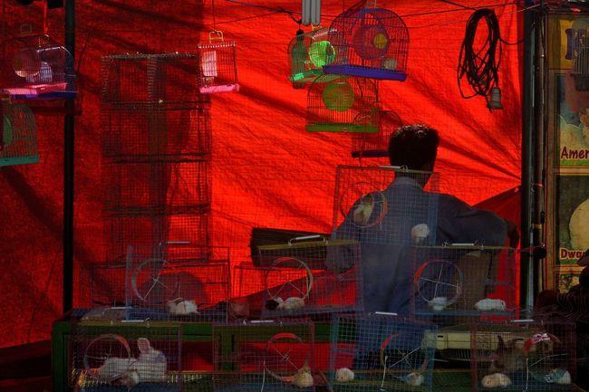 The Street Photographer - 2016 EyeEm Awards Street Photography Streetphotography Light And Shadow Market Urban Lifestyle Urban Exploration City Life EyeEm Best Shots Eye4photography  Colourful Colors Hello World Silhouette