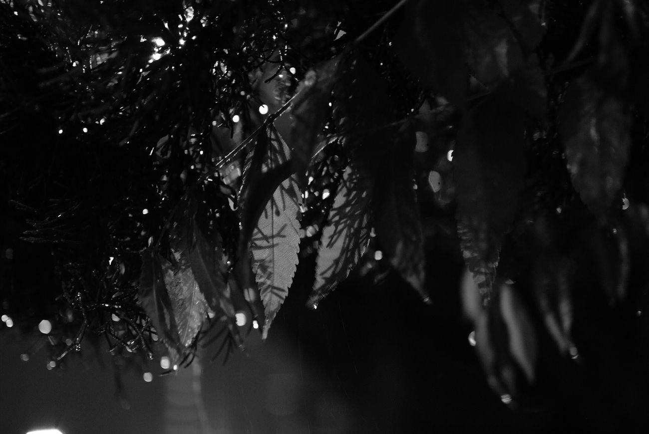 City Streetphotography Light Leaf China Rain Life Night Rainy Days Black And White
