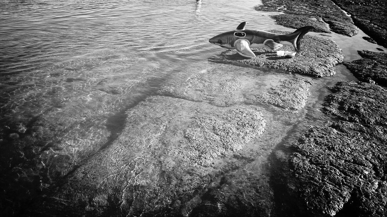 The shark on the beach.... Supernormal Eyeem Beach Shots EyeEM Beach Photography Beach Photography Plastic Shark Plastic Water Rocks And Water Rocks Showcase: February Day Daytime Beach Portugal Black & White Black And White