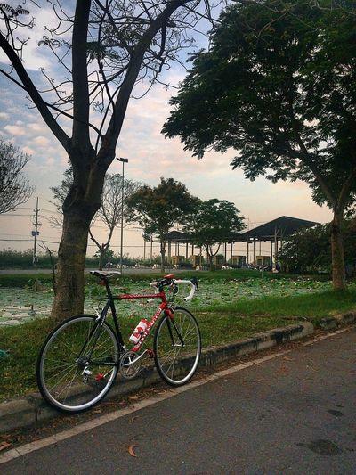 ColnagoC40 HappyBike Twowheels SuriJitjang VietnamCycling SaigonCycling