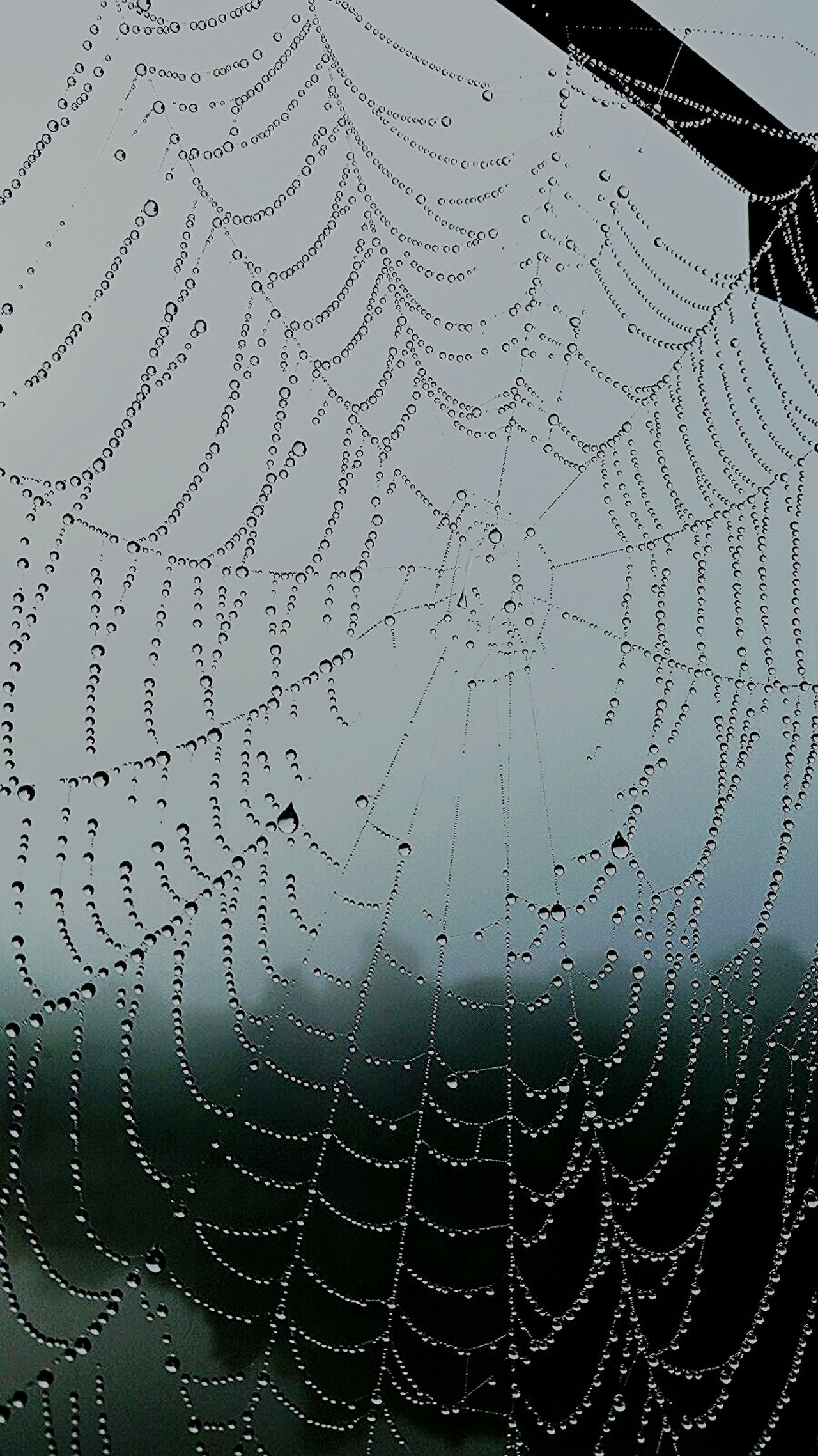 Web meets Water. Morning dew on the Silk Road.... Taking Photos Enjoying Life No Filters Or Effects Passionforphotography Lakelife Nature Is Art Eyeemphotography Lake Living Foggy Morning Dew Condensation Dewdrops_Beauty Spiderweb Spider Silk Spider Webs Spider Web Check This Out This Week On Eyeem Natural The Week On Eyem The Week Of Eyeem My Photography My Backyard My Backyard Oasis My Backyard