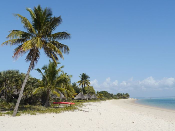 Secluded tropical beach Mozambique Hideaway Barefoot Luxury Robinson Island Coconut Palm Tree Beautiful Lodge White Sand Beach Benguerra Barazuto Archipelago Indian Ocean Best Beaches In The World Secluded Beach Beach Palm Tree Sand Sea Tranquil Scene Scenics Tree