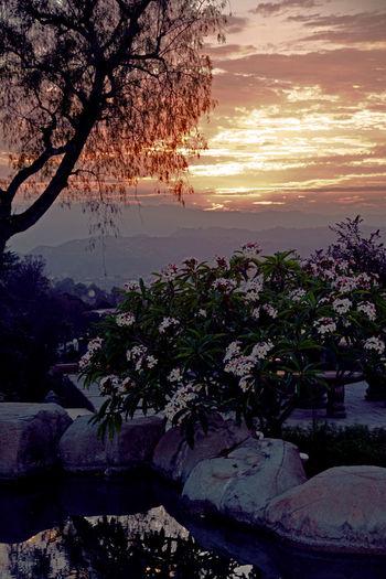 Two views of July 24 sunset at Fallbrook, looking toward Camp Pendleton California Fallbrook Plumeria Tree Sky