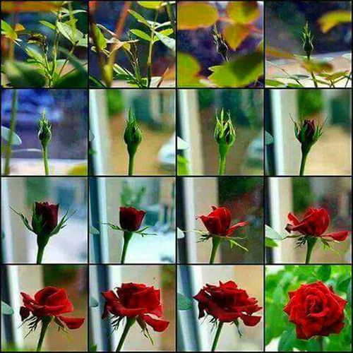 Flowerlovers Feeling Cool  Flowers Dedication Snapshots Of Life