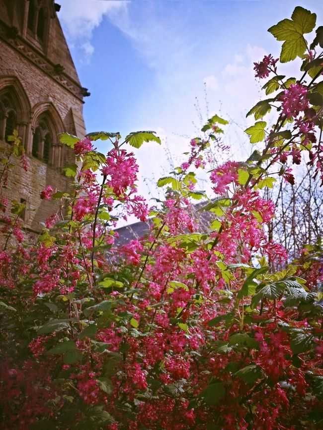 Spring Church Sunny Day Blossom
