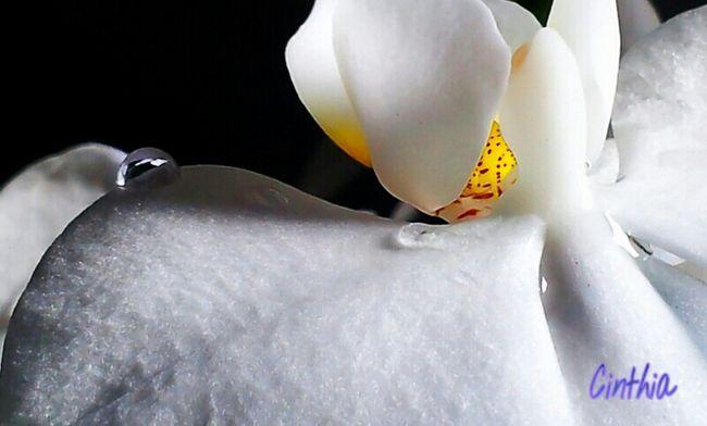 Drops & Flower Taking Photos Macro Macro Week Italianeography Eye4photography  Flowers