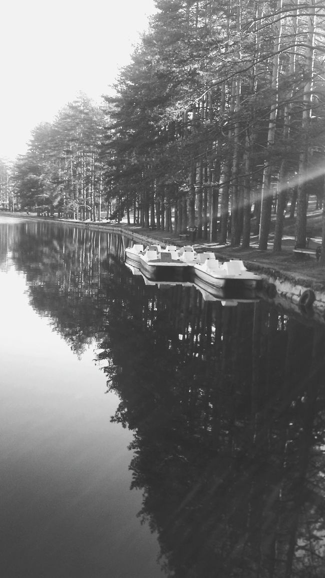 Black & White Water Reflections In The Forest