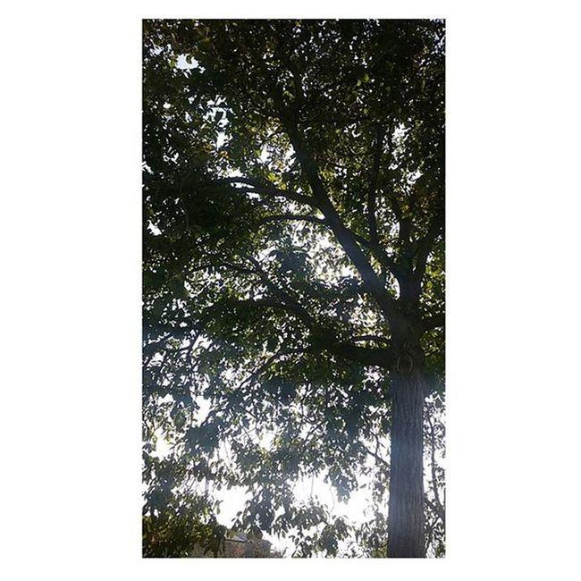 È preferibile... Tree Trees Nature Naturelovers LoveNature Green Evergreen Foglie Autumn Autumnleaves Autumnlife Day Picoftheday Picture Imagine Imaginenature Love Life Irpinia Home