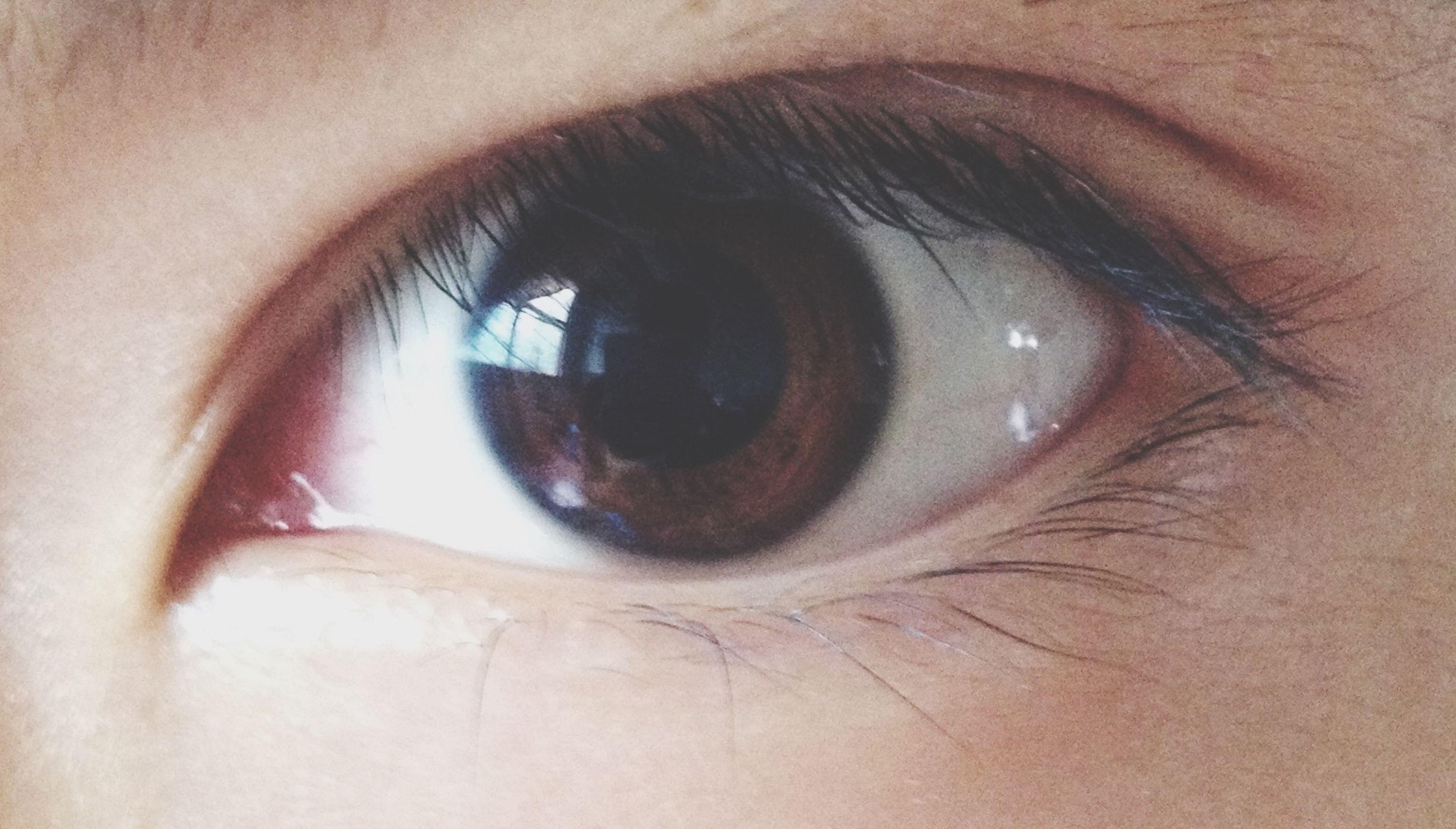 human eye, eyelash, close-up, eyesight, part of, sensory perception, human skin, lifestyles, person, human face, eyeball, extreme close-up, unrecognizable person, iris - eye, looking at camera, indoors, portrait