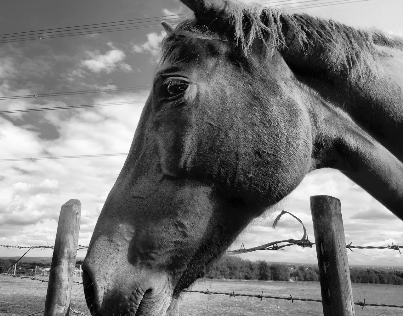 #horse #blackandwhite #barrbeacon #taken #on #my #iphone6splus by @jg.photography.official Horse Animal Themes Animal Head  One Animal Close-up Animal Body Part Herbivorous Side View Domestic Animals Livestock Sky Mammal Focus On Foreground Zoology Day Cloud - Sky Outdoors Animal Pasture Snout IPhoneography
