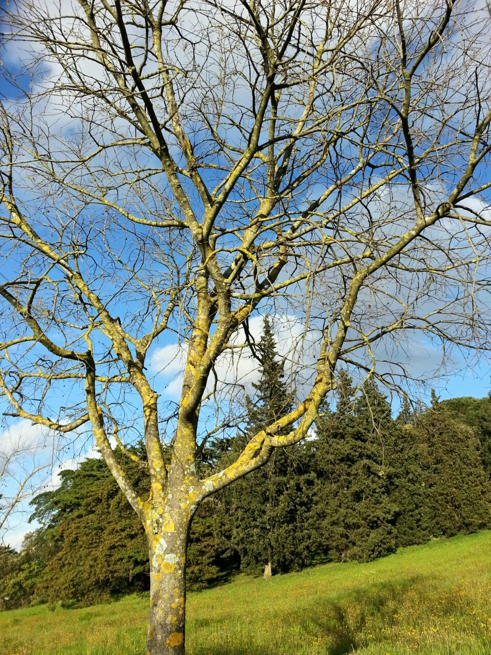 tree, bare tree, branch, green color, nature, tranquility, day, outdoors, beauty in nature, growth, no people, tranquil scene, landscape, sky, scenics, clear sky, grass