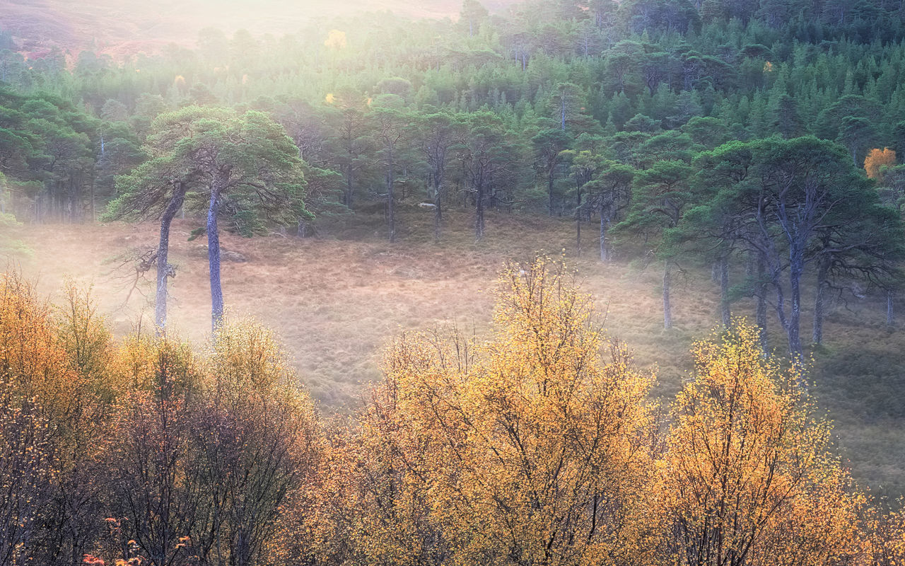My Place: Early Autumn morning light, mist among trees in the Caledonian Forest reserve, Glen Affric. Autumn Autumn Colors Beauty In Nature Caledonian Forest Highlands Landscape Landscape_Collection Landscape_photography Light Mist Misty Morning Nature No People Outdoors Scenics Scotland Scotland 💕 Sunlight Tranquil Scene Tranquility Tree Trees Trees And Nature