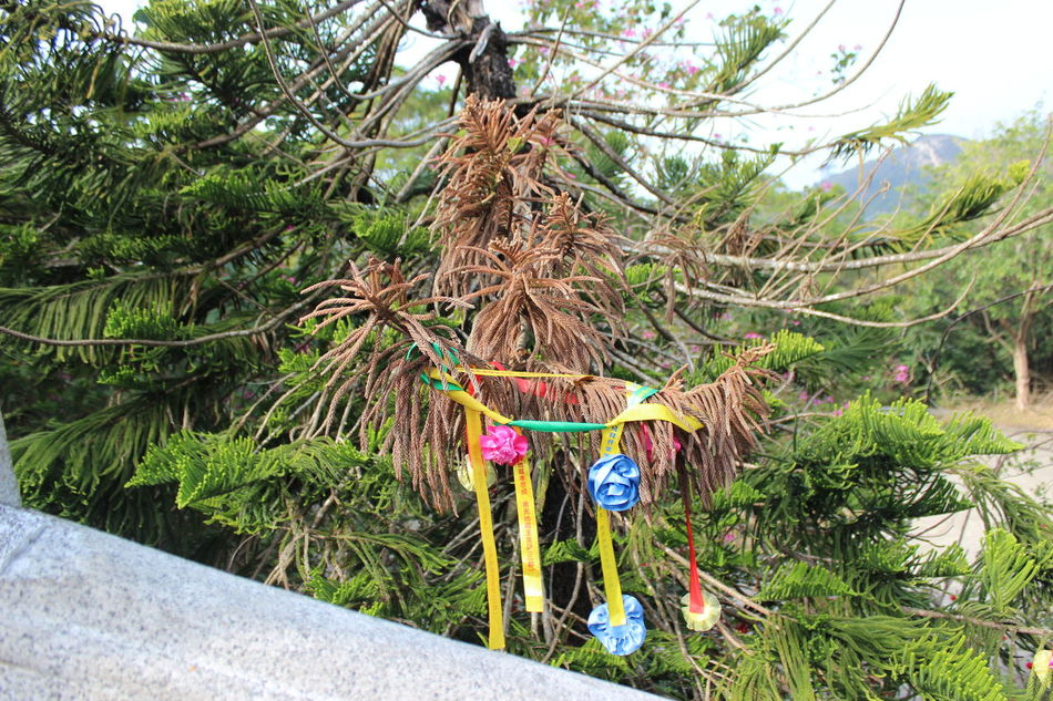 Growth Tree Hanging Plant Nature No People Green Color Day Outdoors Beauty In Nature Low Angle View Place Of Worship Tian Tan Buddha (Giant Buddha) 天壇大佛 HongKong Travel Photography Travel Destinations