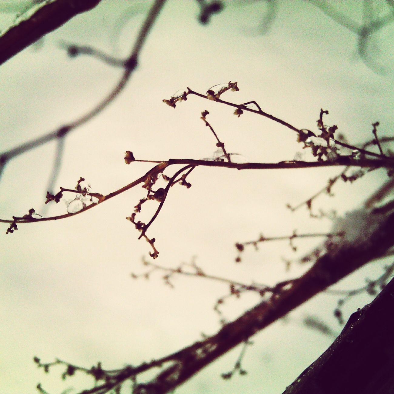 Цветы в вашу ленту First Eyeem Photo
