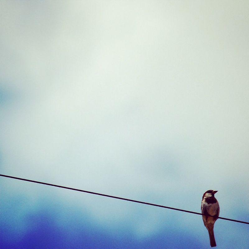 Photography EyeEm Nature Lover Birds Enjoying The View