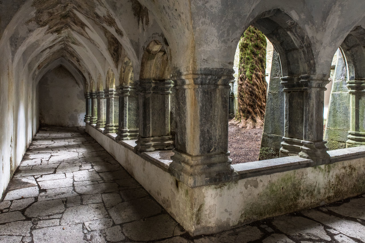Muckross Abbey Cloister with massive old tree in the middle Abbey Ancient Arch Architectural Column Architecture Built Structure Cloister Corridor Day History Indoors  No People Passage Stone The Architect - 2017 EyeEm Awards Tree Trunk