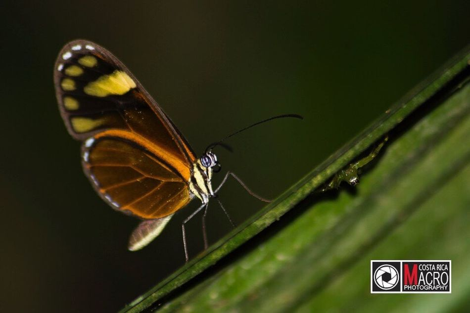 A las escondidas / http:www.costaricamacrophotography.com Macro Macro_collection Macro Photography Macro Insects Costa Rica Pura Vida Beautiful Unic Insect Hide And Seek Friends Spider Buterfly Special Naturelovers Macro_collection Nature_collection EyeEm Best Shots EyeEm Nature Lover Macro