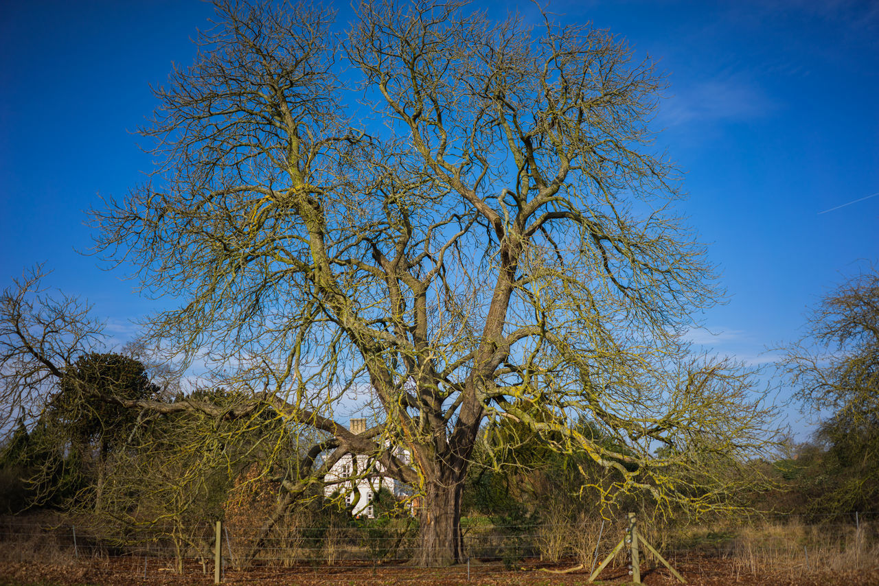 tree, blue, growth, nature, day, outdoors, no people, clear sky, beauty in nature, landscape, sky, scenics, branch, bare tree