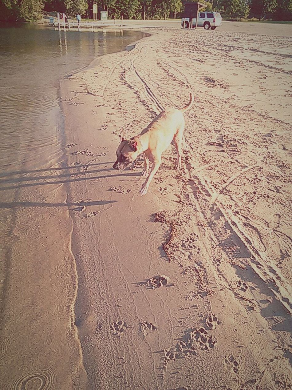 My little Lillee having fun at the beach.