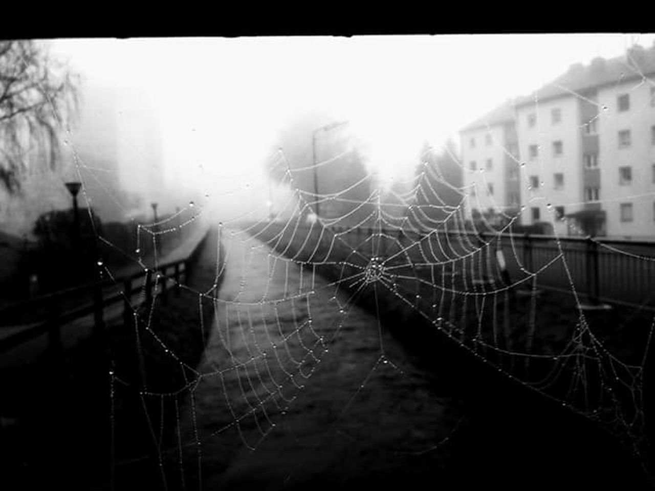 spider web, building exterior, close-up, focus on foreground, web, architecture, day, outdoors, window, spider, no people, nature, built structure, trapped, fragility, city, animal themes