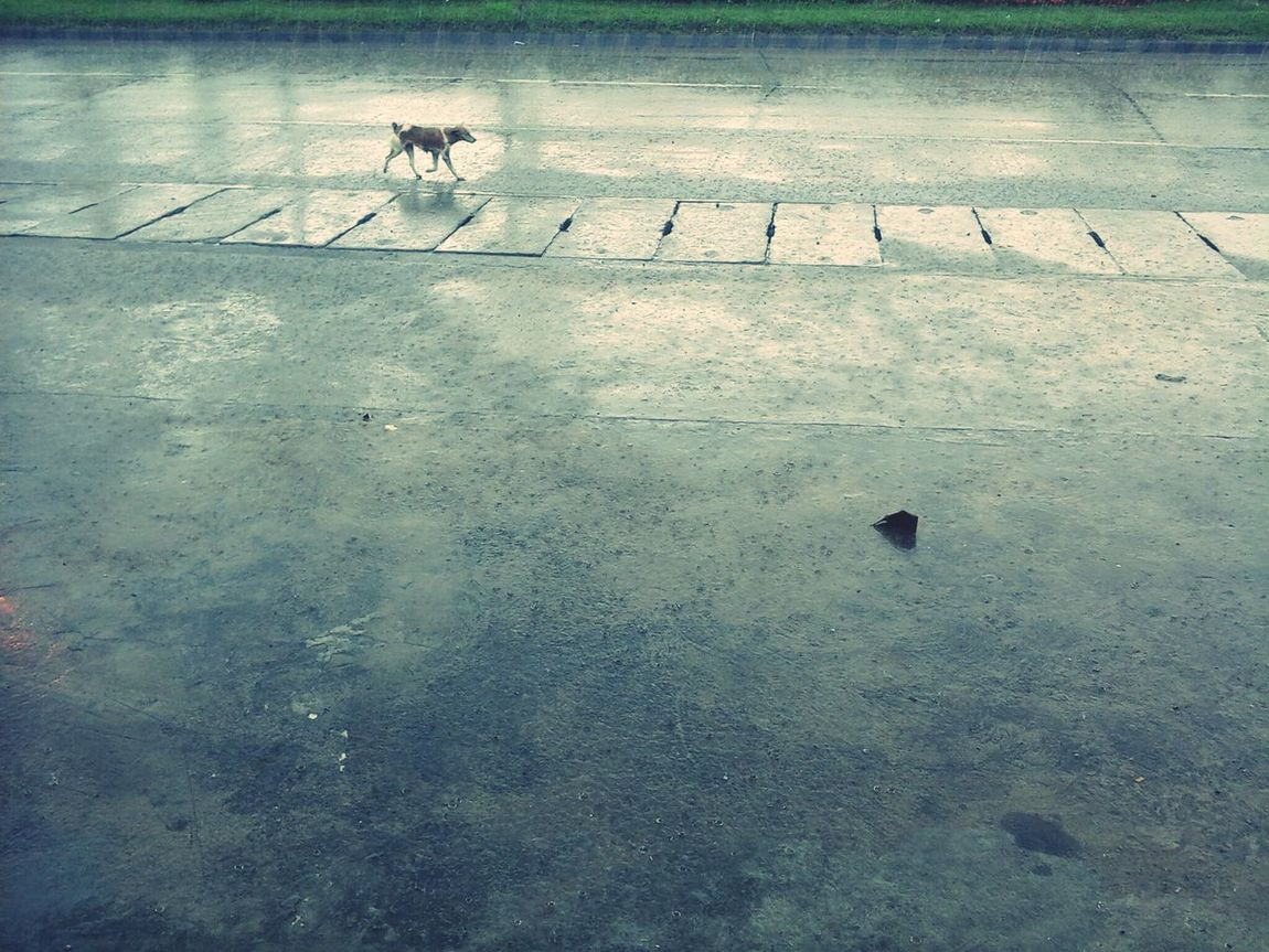 Took a pic outside and saw this Dog running while its raining... Eyeem Philippines