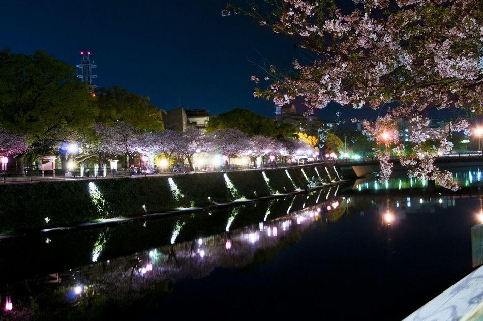 鹿児島市 甲突川 桜 夜桜