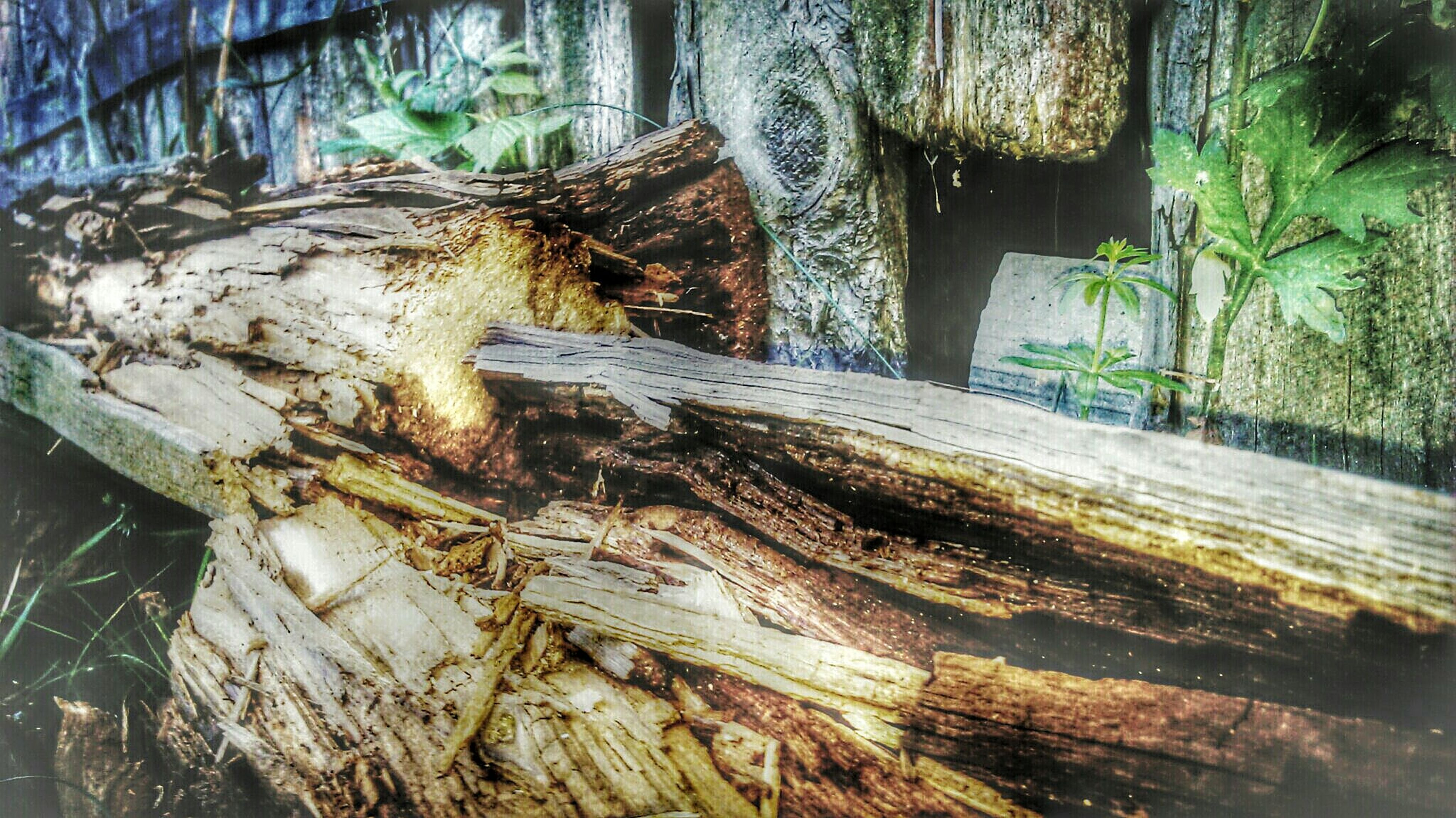 wood - material, tree, tree trunk, log, water, close-up, nature, forest, day, outdoors, wood, no people, textured, growth, beauty in nature, tranquility, high angle view, root, wooden, rock - object