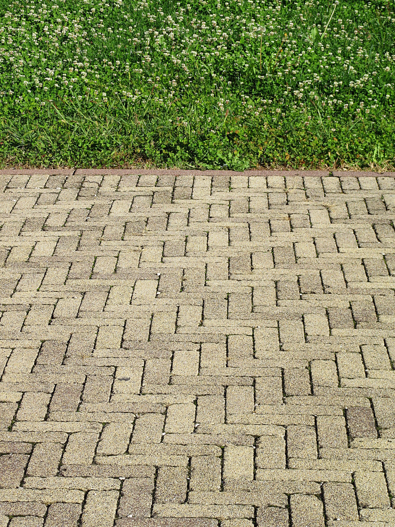 Concrete tiles pavement with green grass background ArchiTexture Backgrounds Close-up Concrete Floor Copy Space Day Footpath Grass Green Color Nature No People Outdoors Pathway Pattern Pavement Textured  Textures And Surfaces Tiles