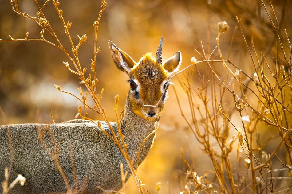 Beautiful stock photos of einhorn, Alertness, Animal Themes, Animal Wildlife, Animals In The Wild