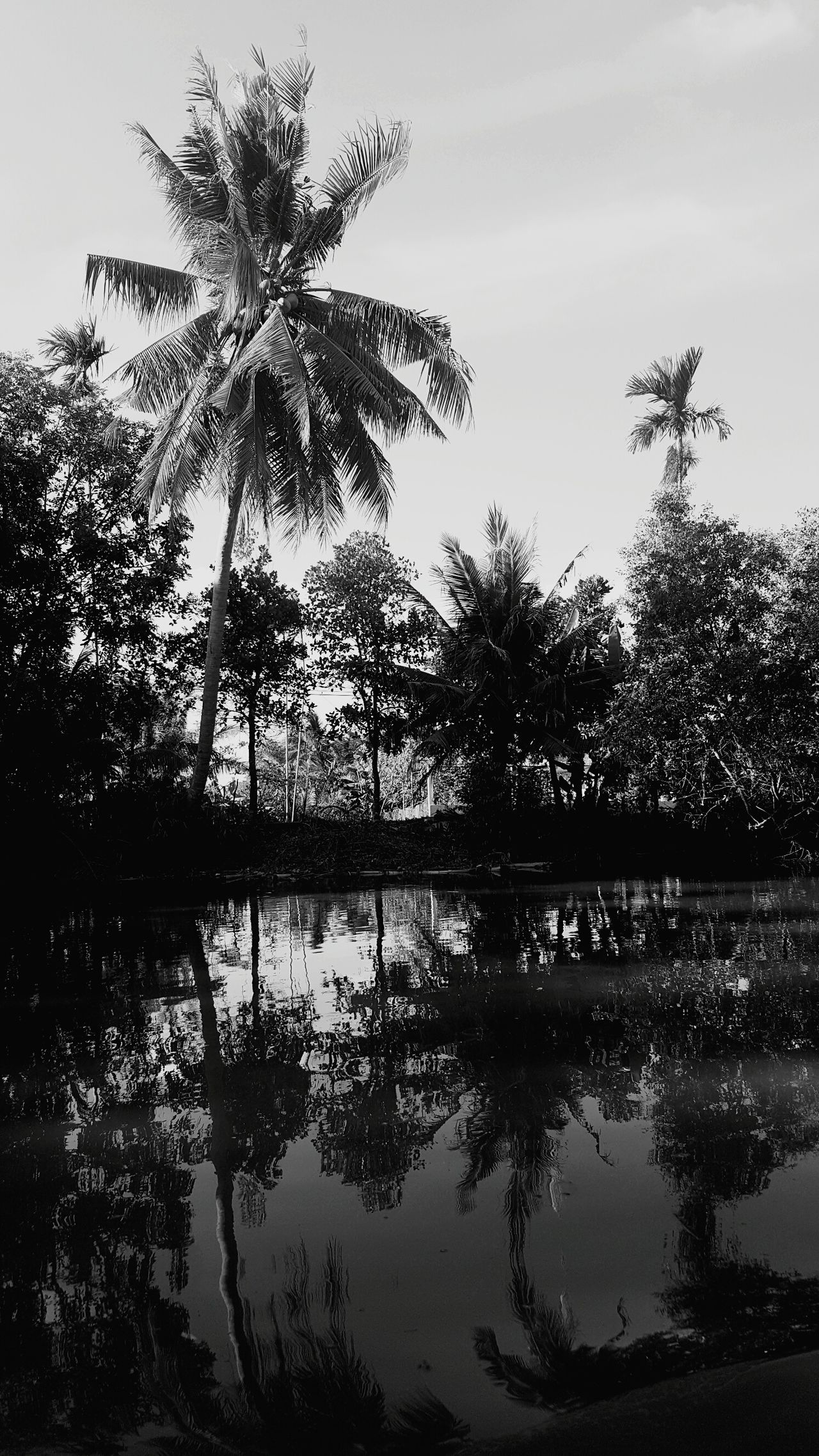 Reflection Tree Water Palm Tree Nature Lake No People Outdoors Sky Tranquility Day Beauty In Nature Travel Destinations Traveling EyeEm Traveling EyeEm Travel Photography Travel Photography Mood Travel Vietnam Mekong Delta Mekong Mekong River B&w B&w Photography