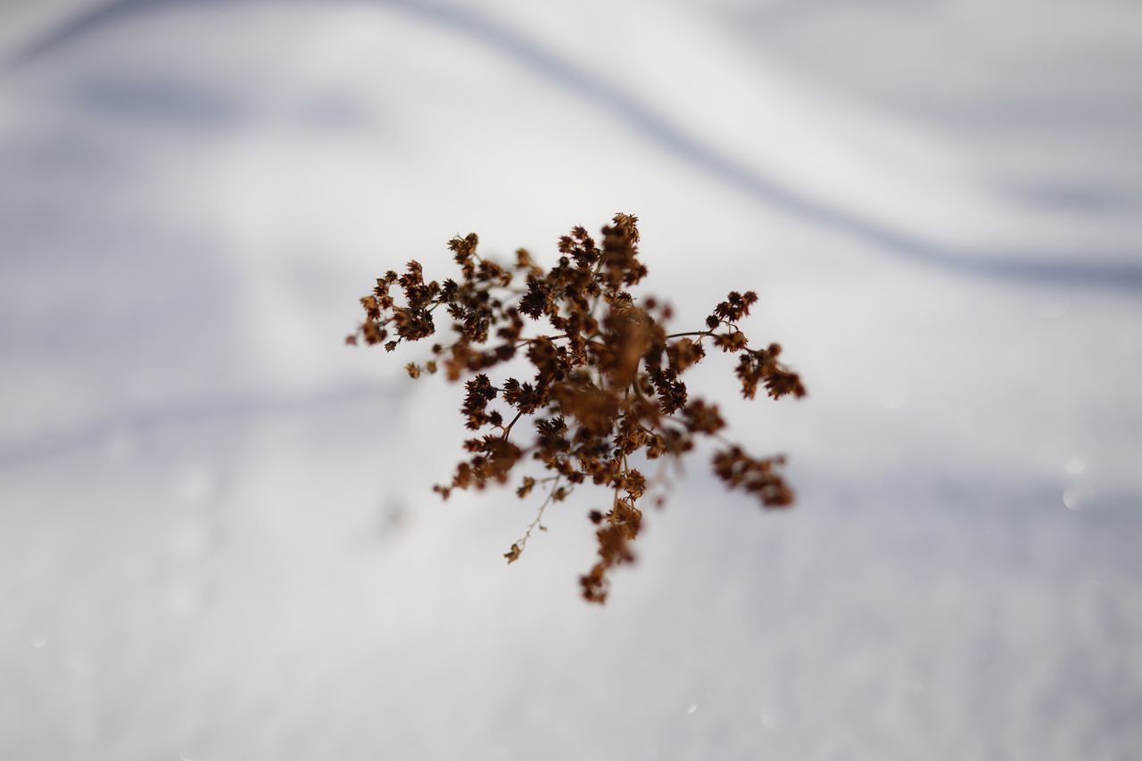 Capture The Moment Winter Snow Beautiful Nature Withered Beauty Dried Leaves Domannaka Nature Fine Art Still Life Depth Of Field Cold Temperature Macro Beauty Tranquility Low Section Abstract Flying High Snow Field Landscapes Full Frame Detail Sigma EyeEm Best Shots 17_01 Resist Break The Mold