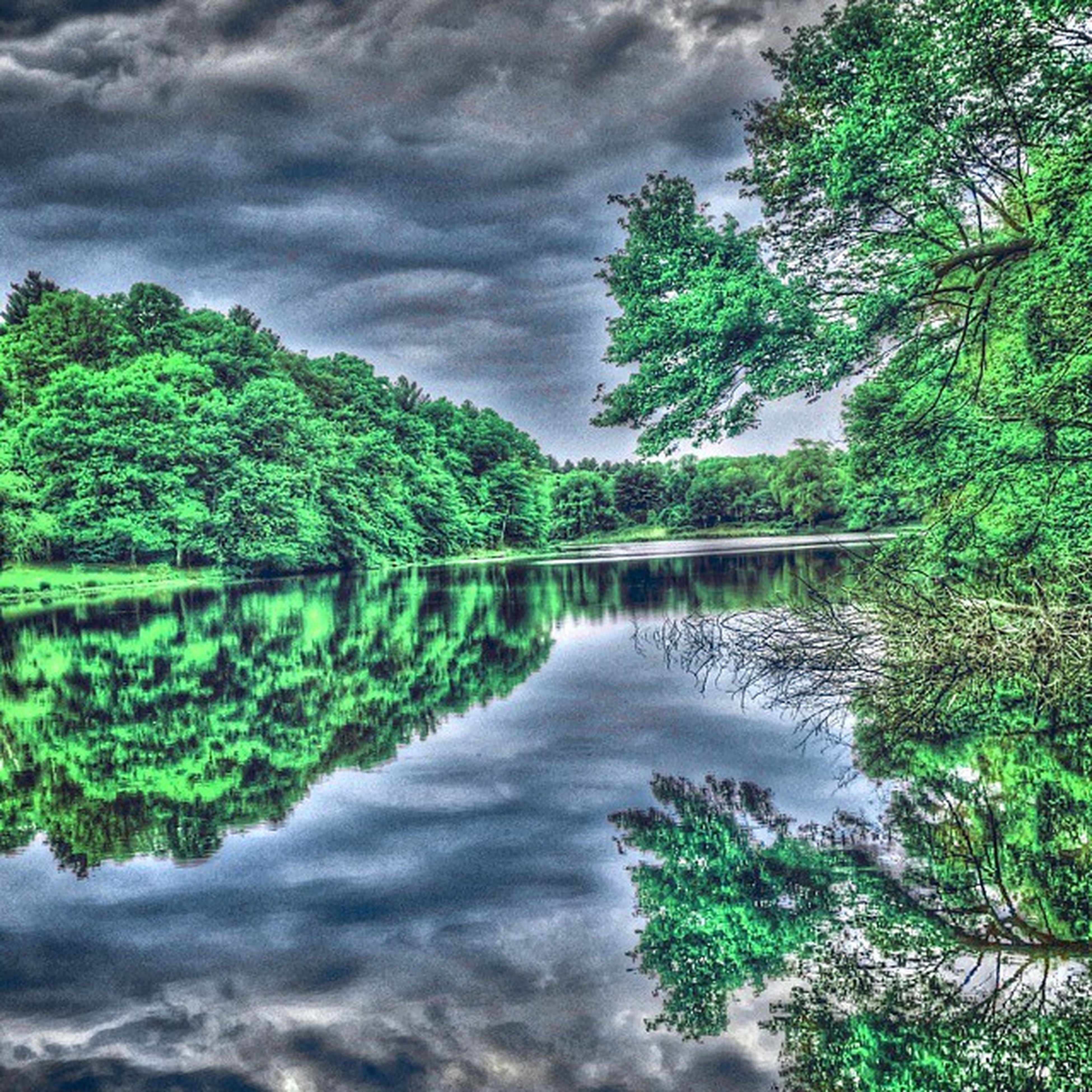 tree, tranquility, tranquil scene, reflection, sky, scenics, beauty in nature, water, cloud - sky, nature, lake, cloudy, green color, growth, idyllic, forest, waterfront, cloud, standing water, non-urban scene