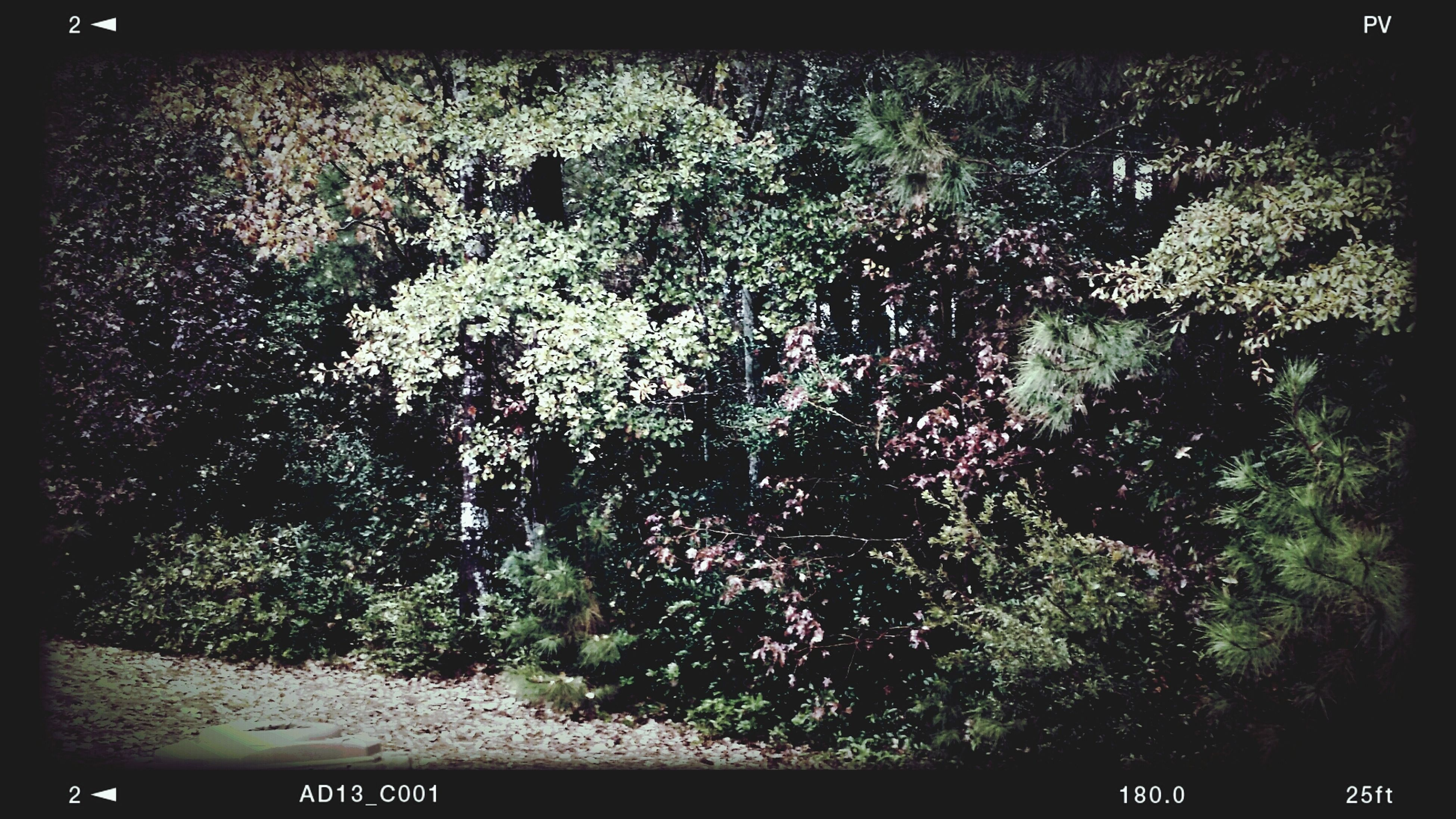 transfer print, auto post production filter, tree, growth, night, nature, branch, plant, beauty in nature, outdoors, no people, flower, tranquility, low angle view, high angle view, illuminated, silhouette, park - man made space, growing