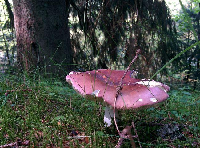 Shrooms Mushrooms