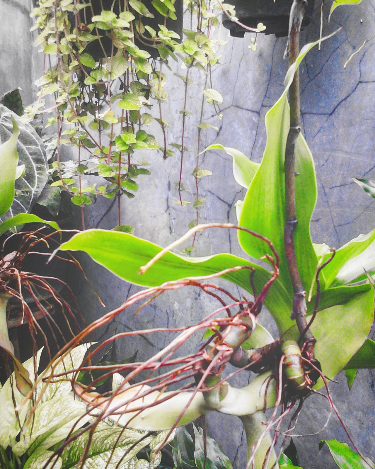Leaf Growth Plant Nature Green Color No People Outdoors Freshness Close-up Beauty In Nature Day Photosynthesis