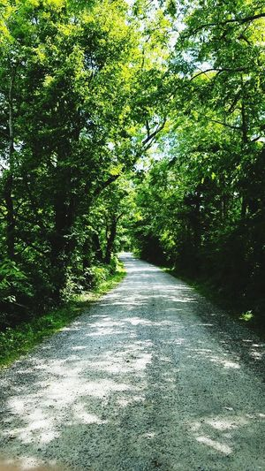 The Way Forward Tree Nature Road Growth Outdoors Beauty In Nature Tranquility Scenics Running Run