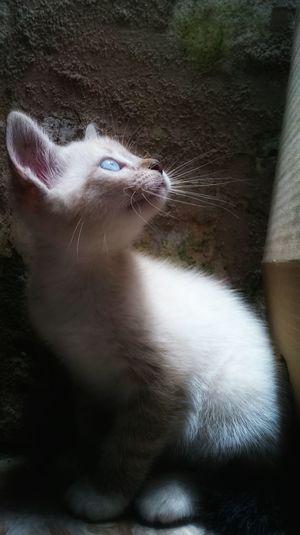 The Beautiful Sister DPassos Abandoned Pet Cats Of EyeEm HUMANITY