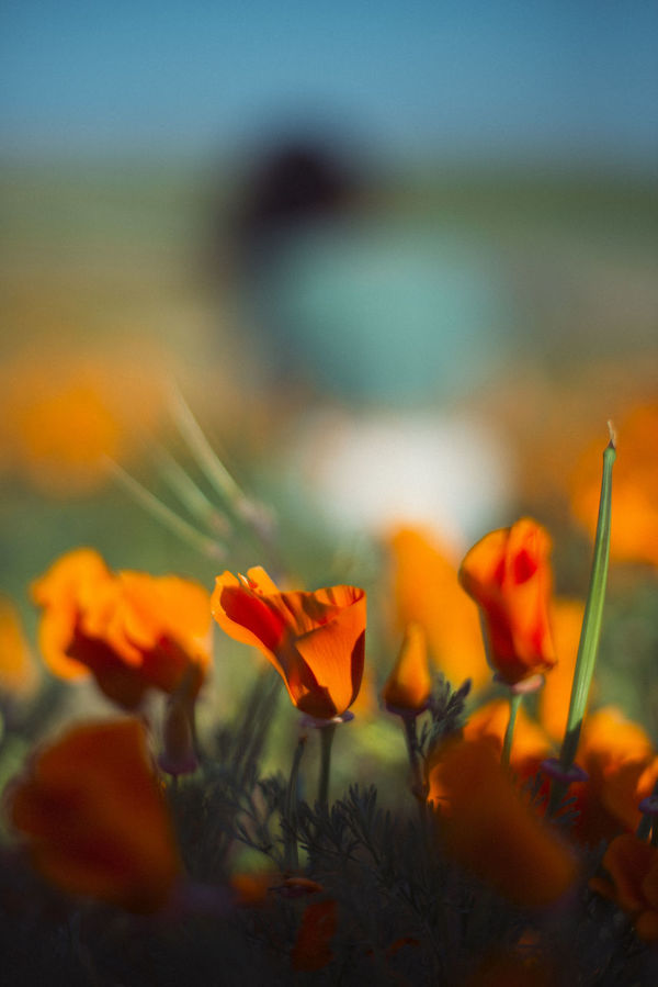 In full bloom pt.2 Beauty In Nature Blooming Close-up Day Field Flower Focus On Foreground Nature Outdoors Plant Sky