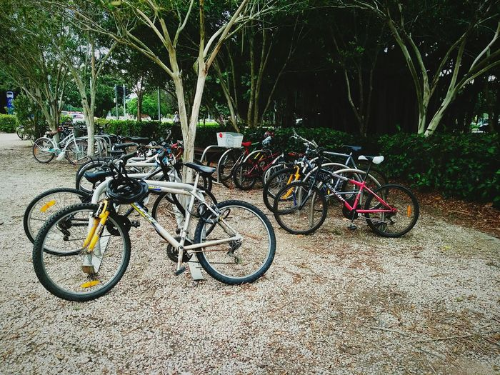 Everyone's leave their bikes for parking, while they are away for tourist cruises everyday. Bikes Parking Bikes🚲 BikeSport Everydayeverywhere Locks And Chains No People No One Around Beautiful Photography💕 Bike Photography